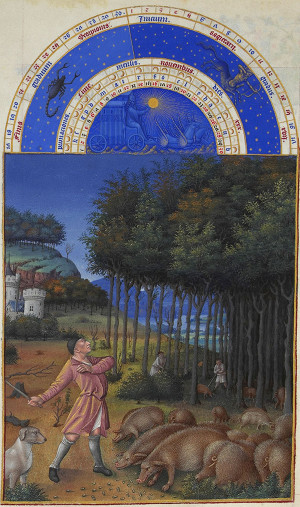 Page from the calendar of the Très Riches Heures (November: pigs eating acorns)